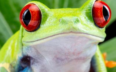 The Garrulous Jay – Frog Boiler
