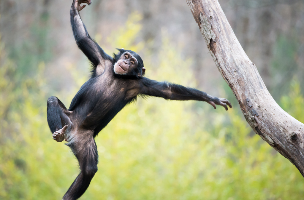 The Garrulous Jay – Cheeky Monkeys